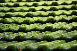 The Impact Of A Green Roof For Your Home